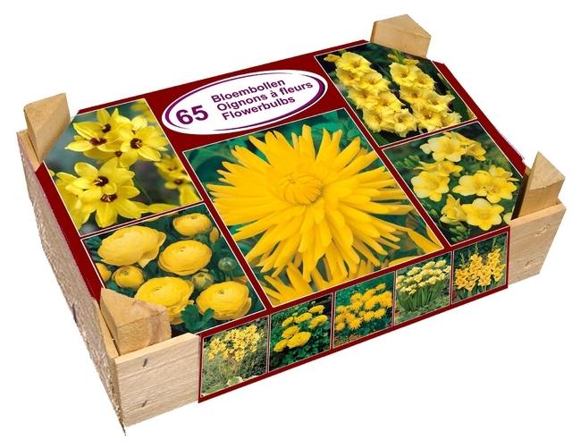 Gele Sensatie Box