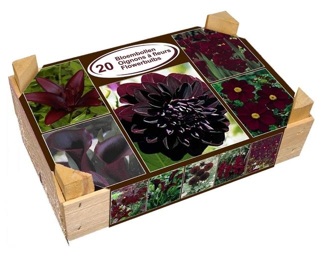 Chocolade Sensatie Box