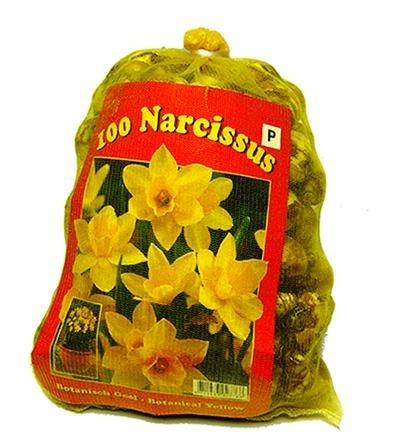 Narcissen Botanisch (XL-Verpakking)