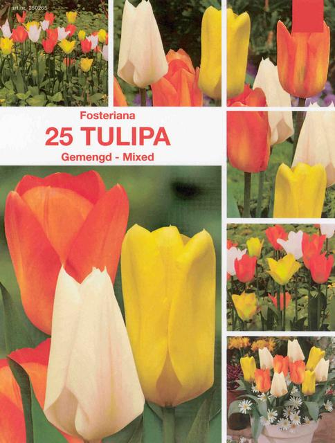 Tulpenbollen Fosteriana Mix (Voordeelpakket)