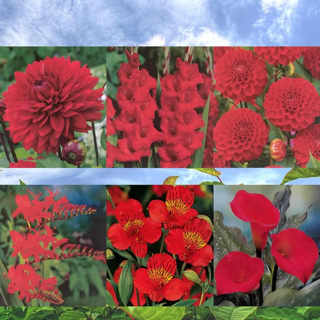 Vierkante Meter Rode bloemen 1