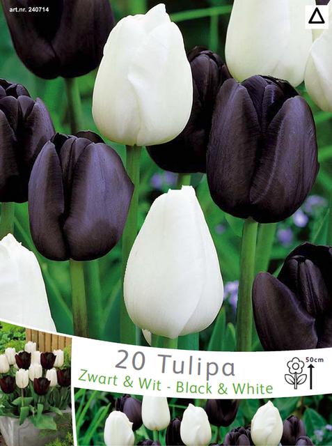 Tulpen Zwart en Wit Mix