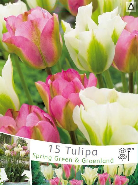 Tulp Viridiflora Spring Green & Groenland