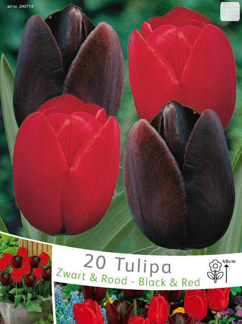 Tulpen Zwart & Rood Mix