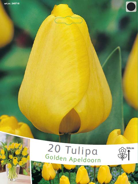 Tulp Golden Apeldoorn (Voordeelpakket)