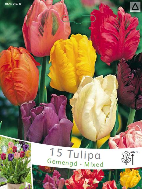 Papegaai Tulpen Mix