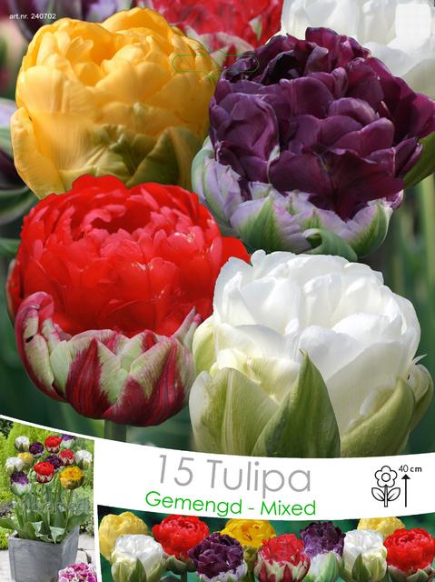 Tulp Ice Cream mix (Voordeelpakket)