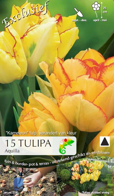 Tulp Aquilla (Kameleon)