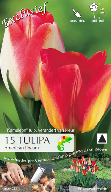 Tulp American Dream (Kameleon)