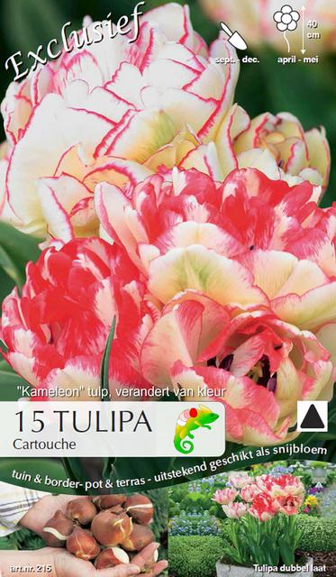 Tulp Cartouche (Kameleon)