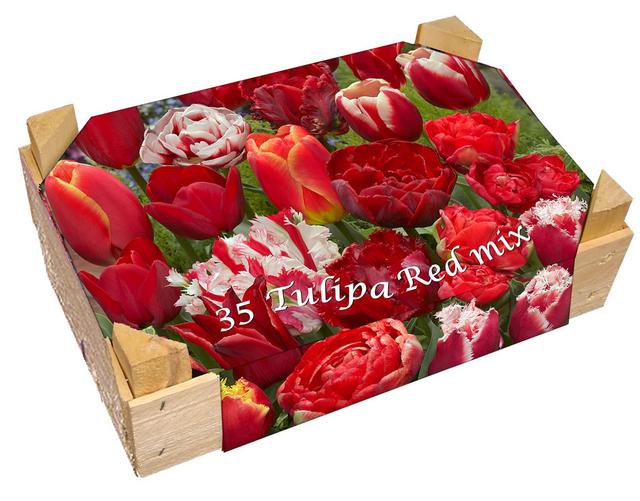 Kistje Tulpen Rood Gemengd (Relatiegeschenk)