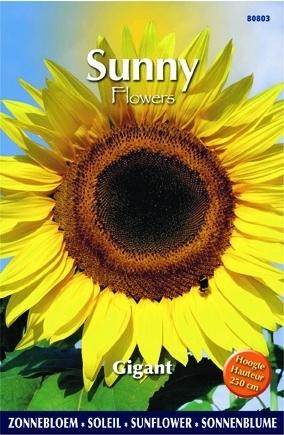 Sunny Flowers - Gigant