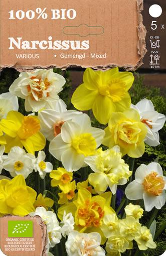 Biologische Bloembollen: Narcissen Botanisch