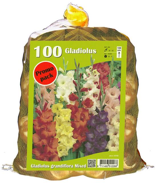 Gladiolen Grootbloemig (Voordeelpakket)