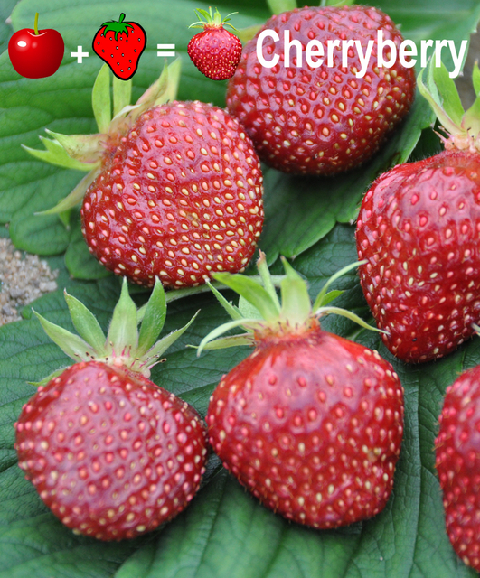 Aardbei Cherryberry