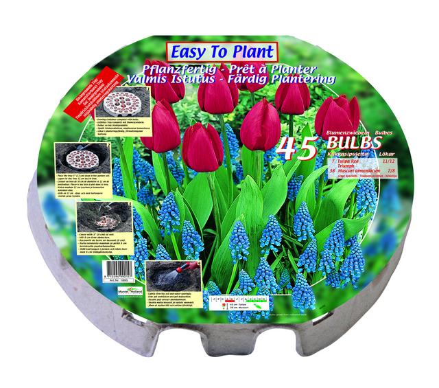 Tulpenpizza met 45 Bloembollen (Relatiegeschenk)