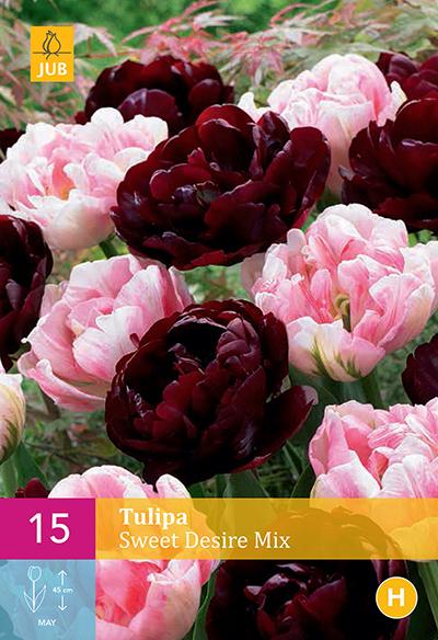 Tulpen Sweet Desire Mix