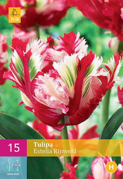 Tulp Estella Rijnveld