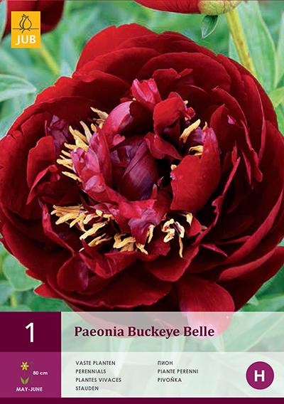 Pioenroos Buckeye Belle