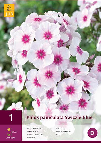 Phlox Swizzle Blue