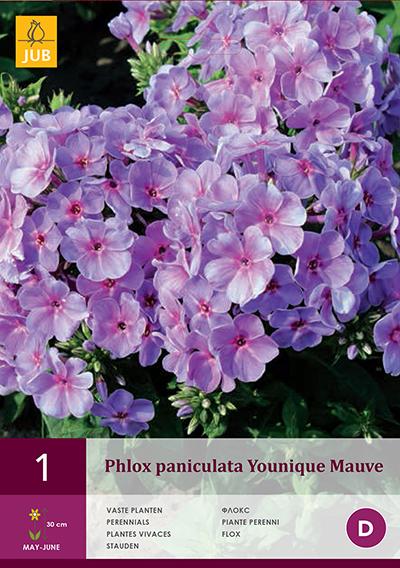 Phlox Blauw