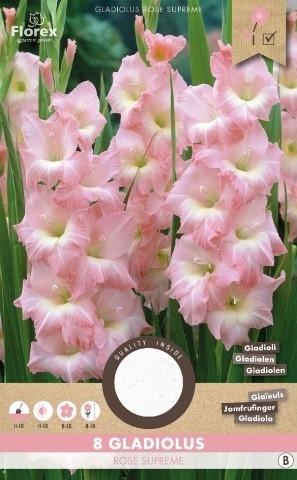 Gladiolen Rose Supreme