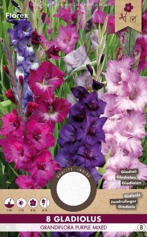 Gladiolen Paars Mix