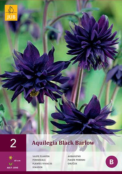 Akelei Black Barlow