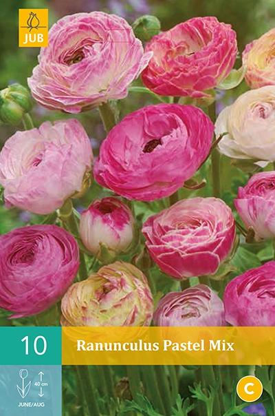 Ranonkel Pastel Mix - Ranunculus