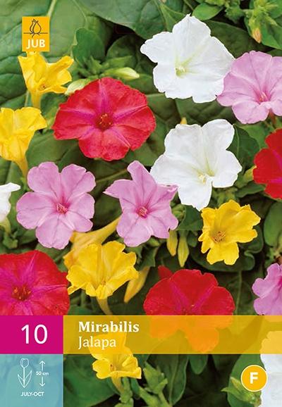 Mirabilis Jalapa Mix