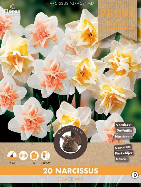 Narcis Grace Mix