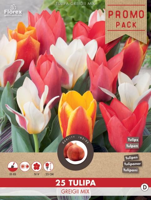 Tulpen Greigii Mix