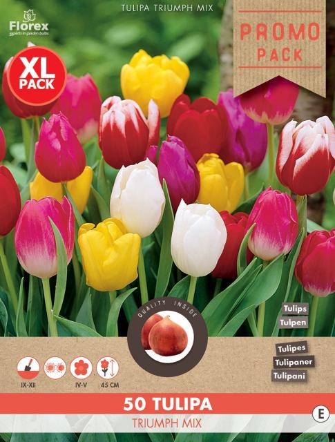 Tulpen Triumph Mix