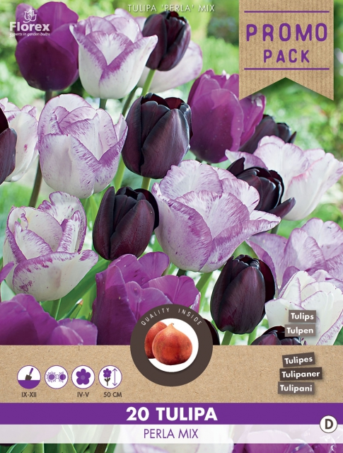 Tulpen Perla Mix