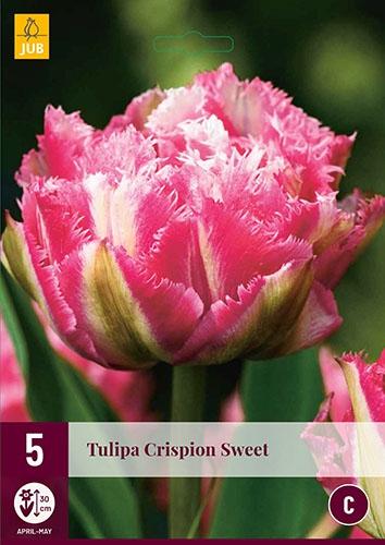 Tulp Crispion Sweet