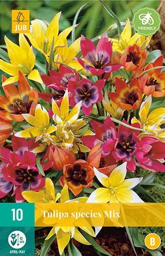Tulpen Botanisch Mix