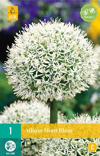 """Allium Mont Blanc â"""" Sierui"""