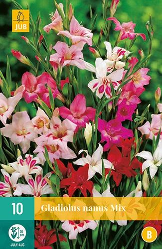Gladiolen Mini Mix - Gladiolus Nanus