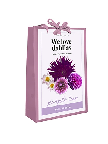 We Love Dahlias - Purple Love