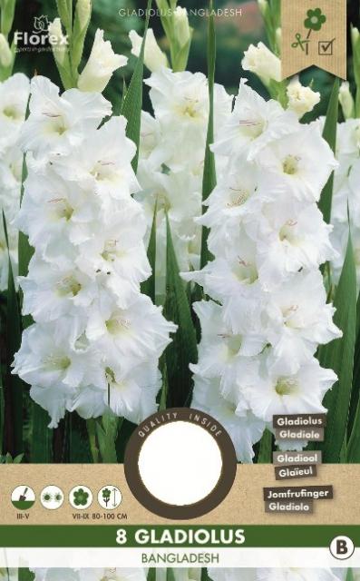 Gladiolen Wit - Gladiolus