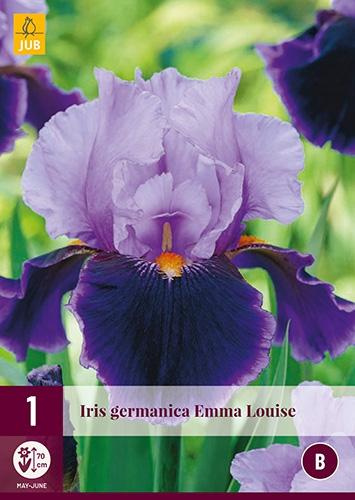 Iris Germanica Emma Louise