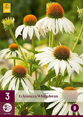 Echinacea Wit