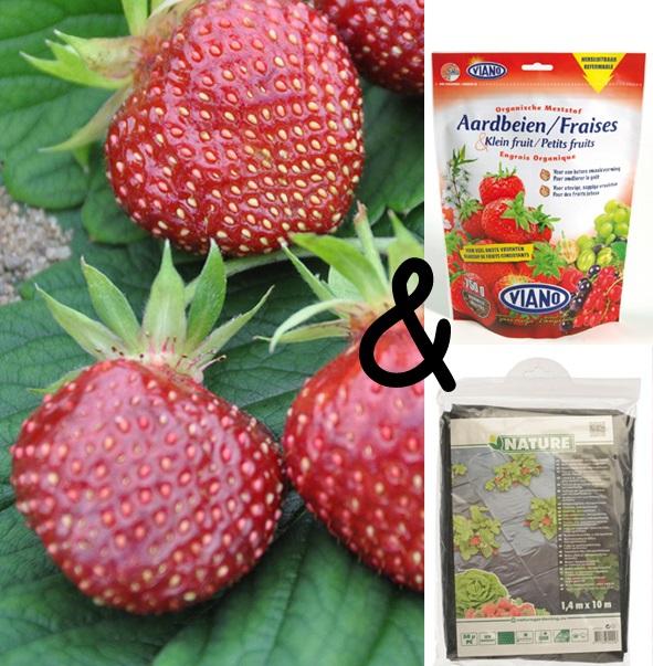 Teeltpakket Aardbei Cherryberry