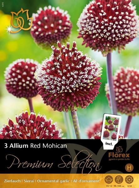 Allium Red Mohican - Sierui