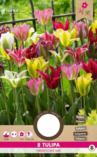 Tulp Viridiflora Gemengd - Tulipa