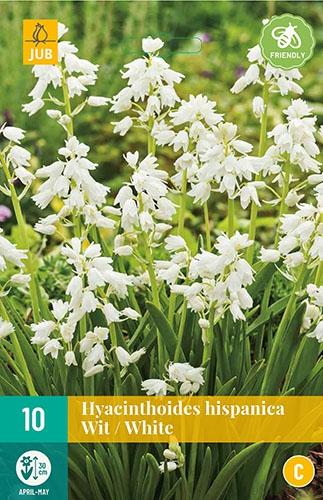 "Hyacinthoides Hispanica Wit â"" Spaanse Boshyacinten"