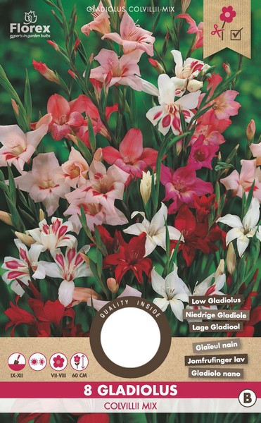 "Gladiolus Colvillii Gemengd â"" Zwaardlelie"