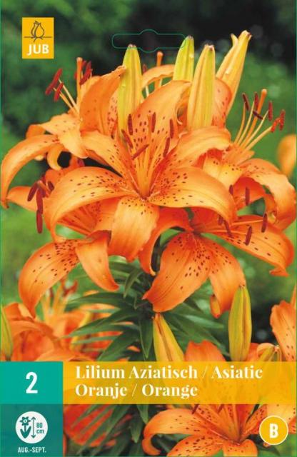 Lilium Asiaticus Oranje - Aziatische Lelie