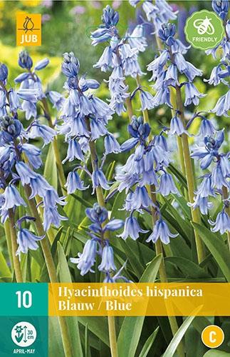 "Hyacinthoides Hispanica Blauw â"" Spaanse Boshyacinten"