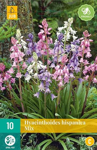 "Hyacinthoides Hispanica Mix â"" Spaanse Boshyacinten"
